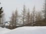 Mosses - 28.02.2009